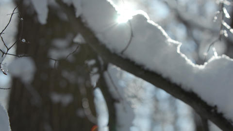 Winter forest cowered witch thick layer of snow GIF