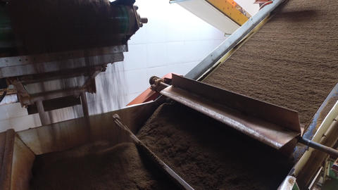 black tea moving on machine conveyor at factory Footage