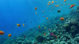 Underwater landscape of coral reef. Red Sea Footage