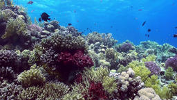 School of colorful fish on background of coral reef landscape underwater Archivo