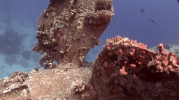 Screw ship Salem Express wreck on seabed underwater in Egypt Footage