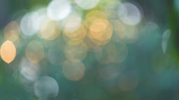 Beautiful green nature background. Sun shines through… Stock Video Footage