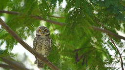 owl In nature GIF