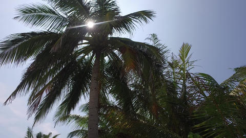 palm trees and sun rays in sky Footage