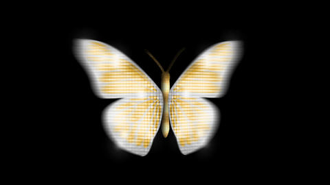 Butterfly gold Front Animation