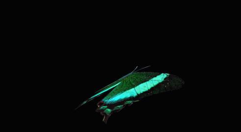 Butterfly green CU blur Animation