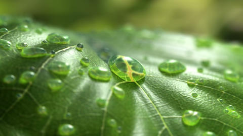Water Drop Flows Down on a Leaf Animation