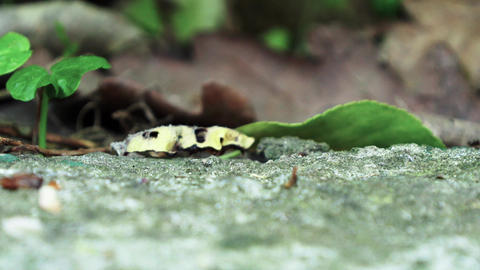 Ants running Close Up Macro_2 Footage