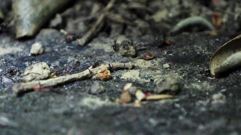 Ants running Close Up Macro_3 Footage