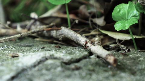 Ants running Close Up Macro_5 Footage