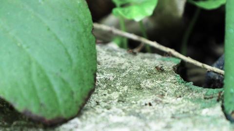 Ants running Close Up Macro_6 Footage