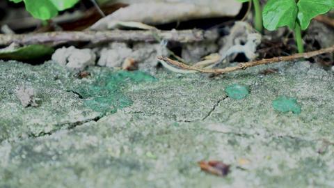 Ants running Close Up Macro_7 Footage