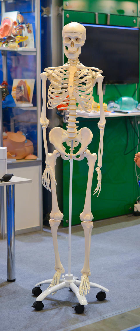 White human skeleton dummy Photo