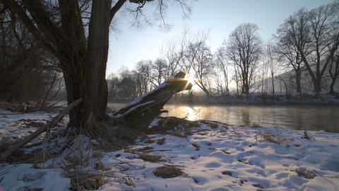 Sunny morning with sunrise over trees on the river bank Dolly shot Live Action