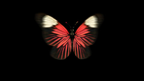 Butterfly Red Front Animation