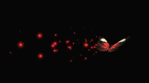 Butterfly Red V9 blur Animation