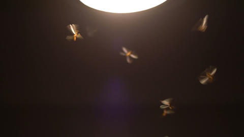 Moths flying around light slowmotion Footage