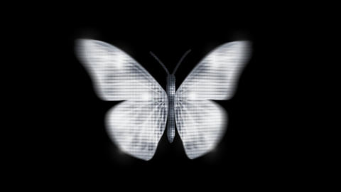 Butterfly Silver diamond Front Animation