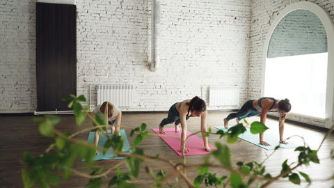 Yoga students are doing elements of Sun Salutation warm-up sequence on bright Footage