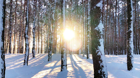 calm winter nature scene of forest landscape in sunset Footage