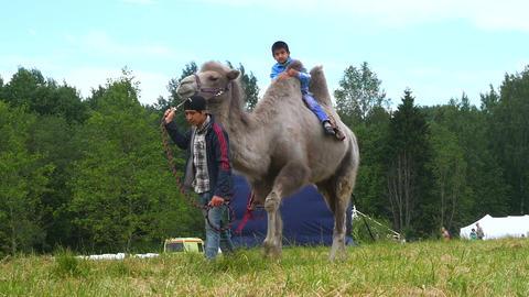Camel. The Muslim festival of Eid al Adha. Saint-Petersburg. 8.07.2017 Live Action