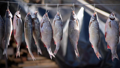 River fish marinated in salt hanging on hook for drying in nature 영상물