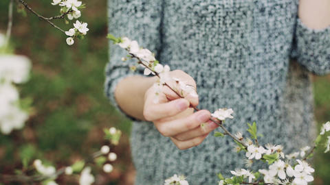 Female hand touches a branch of blossoming cherry Footage