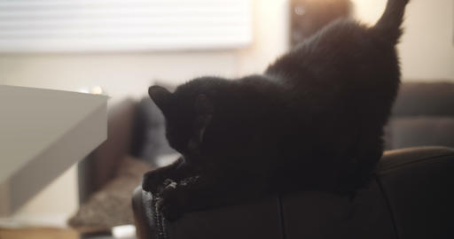 Black house cat damaging a new leather chair Stock Video Footage