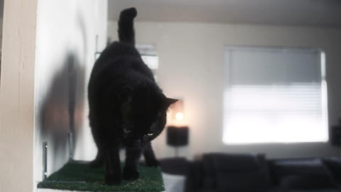 Black cat jumps onto a cat shelf in slow motion Stock Video Footage