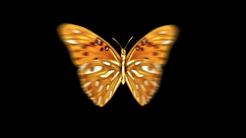 Butterfly OrangeRed Front Animation