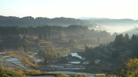 Morning glow of rice terraces Live Action