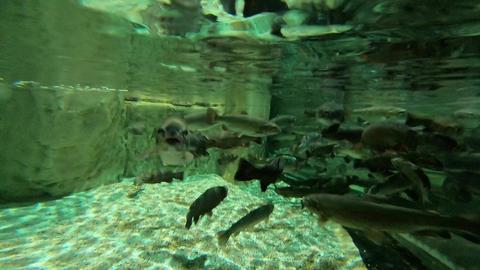 Aquarium Live Action