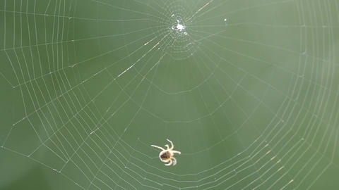 Small spider waving a spider net Footage