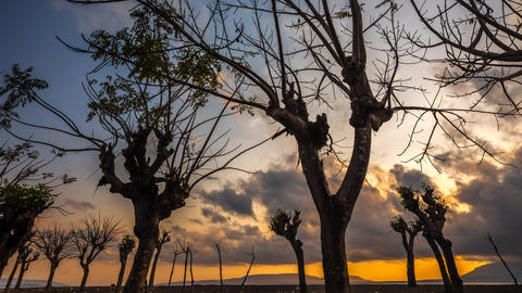 Scary Trees Sunrise Timelapse At A Beach In Bali, Indonesia stock footage