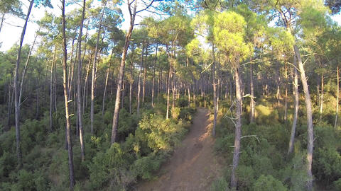 Forest trees woods plants nature summertime. Drone takes off aerial shot. Flight Footage