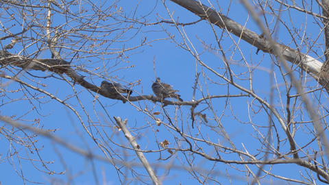 Two birds on a dry branch Footage