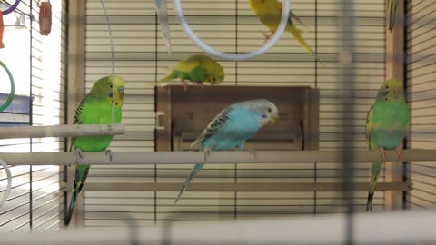 The Bird Cage Parrots Live Action
