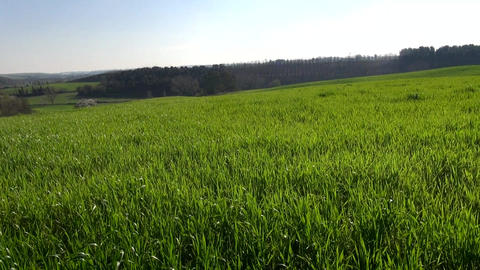 Beautiful Green Field Outdoor Colorful Landscape Footage