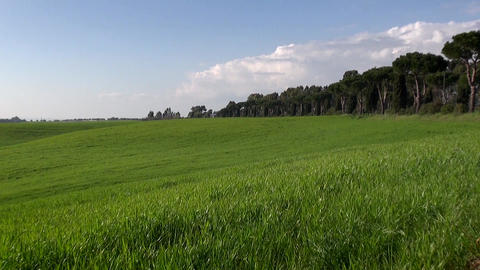 Italian Green Landscape on a Sunny Day Zoom in Footage