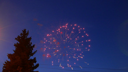 Fireworks display, colorful explosions, dark fir tree silhouette on foreground Footage