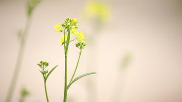 Wild Flower2 stock footage