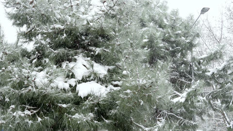 snowy day, snow on pine tree Footage