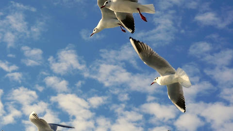 Slow Motion Cute hungry seagulls flying above the boat and catching food in the Footage