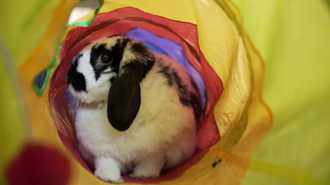 Adorable Bunny In A Tube Live Action