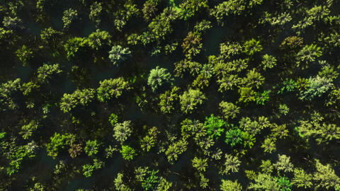Colorful aerial view camera moves from green forest of dense mixed tree tops Archivo
