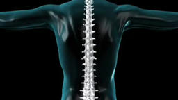 Focused on spine INTERVERTEBRAL region in loop Footage
