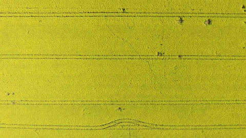 Aerial shot of field with rape Archivo