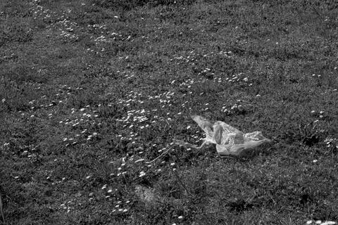 Trash on flower field black and white フォト