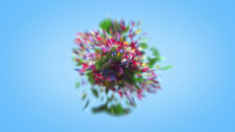 Exploding flowers Petals in 4K Animation