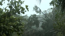Hurricane, strong wind with rain breaks off the leaves and knocked down the tree Footage